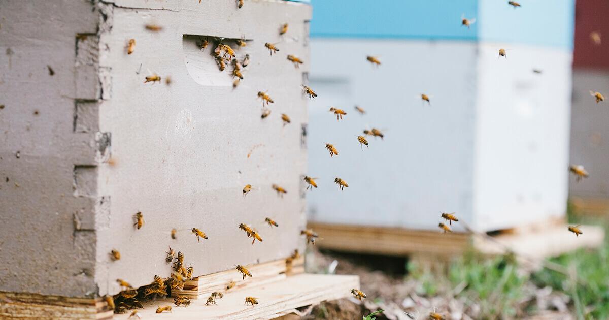 Backyard Beekeeping | Beesponsible